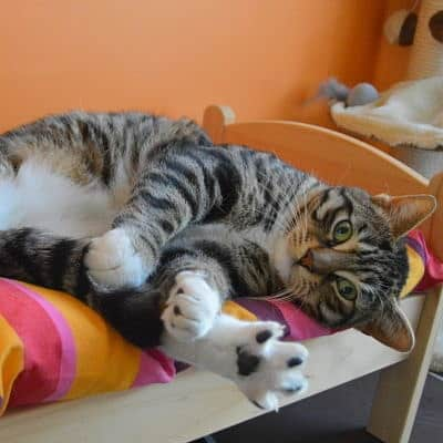 chat-prelasse-sur-chaise-de-la-pension-pour-chats-montpellier-herault