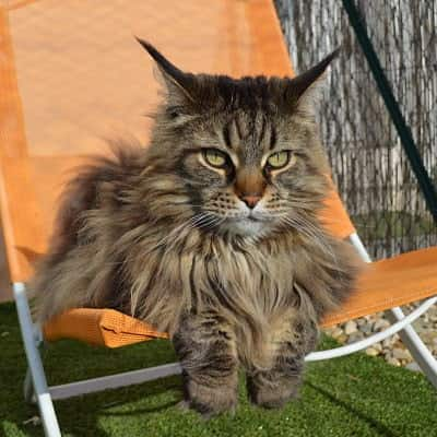 chat-en-detente-sur-chaise-pension-pour-chats-montpellier-herault